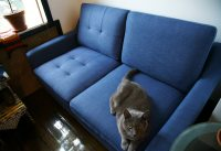 Pet-Friendly and Easy-to-Assemble Burrow Sofas - Cool Hunting