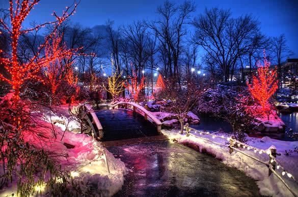 Lights Discount Zoo