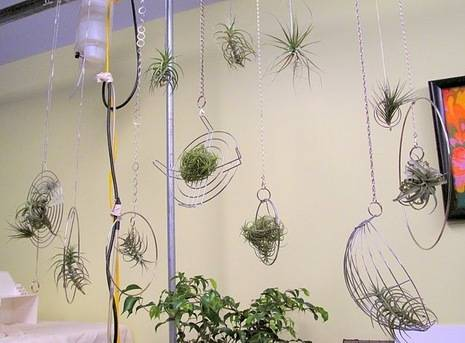 More Gorgeous Air Plant Displays  Curbly