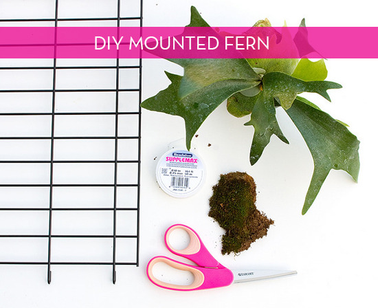 diy modern staghorn fern