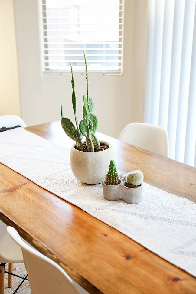 Tips For Decorating With Cactus