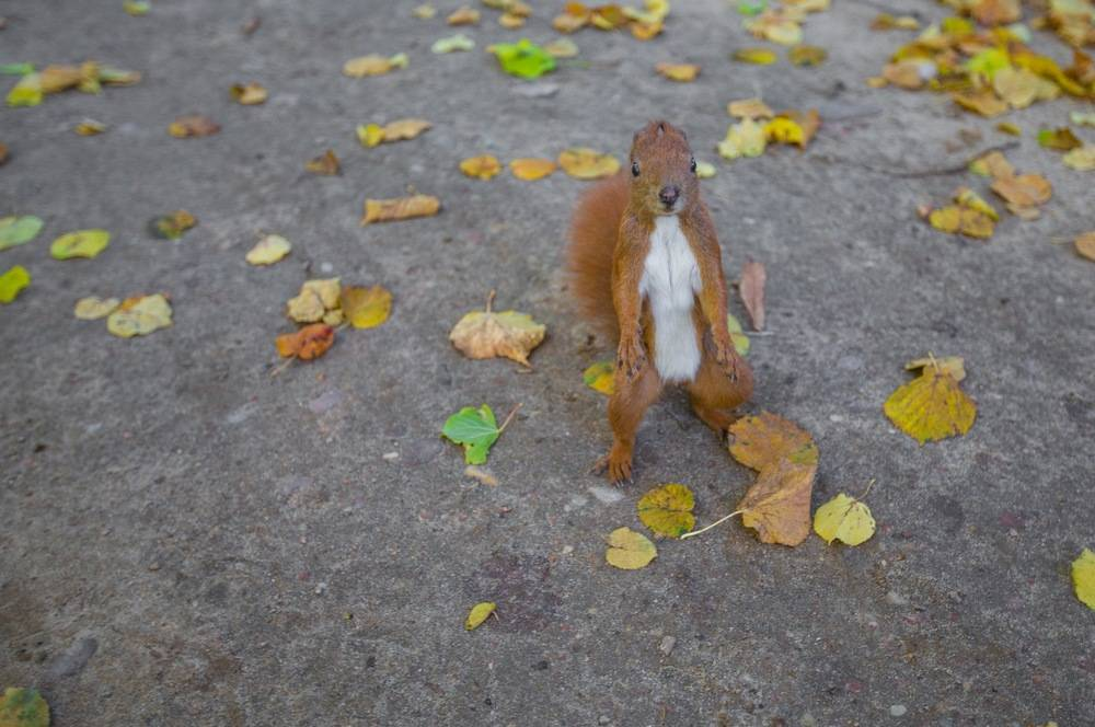 Surprised squirrel