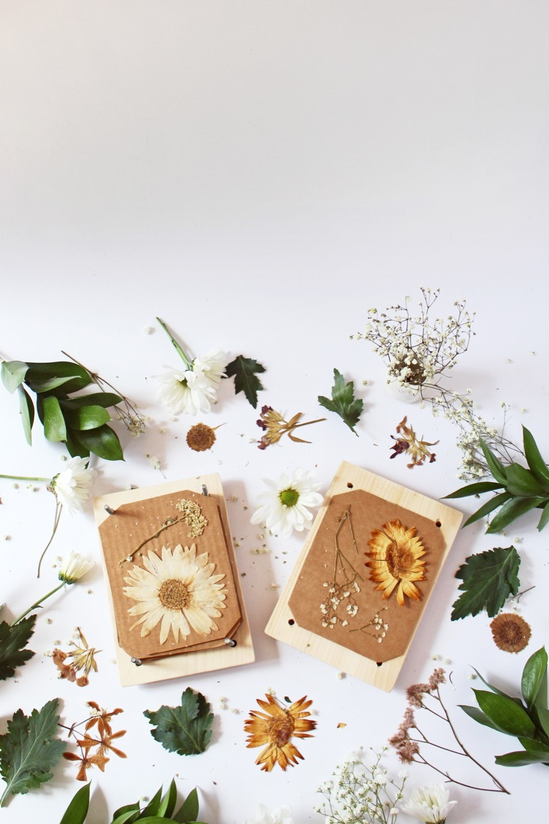 Make this DIY flower press from wood and bolts