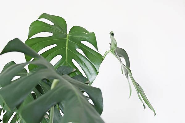 We Guarantee You Won't Kill These 10 Houseplants