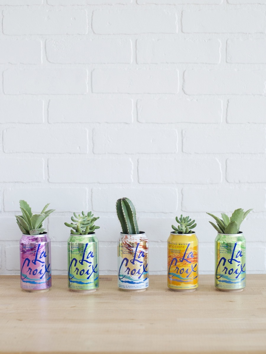 La Croix Planter DIY | Succulents + Sparkling Water = AWESOME