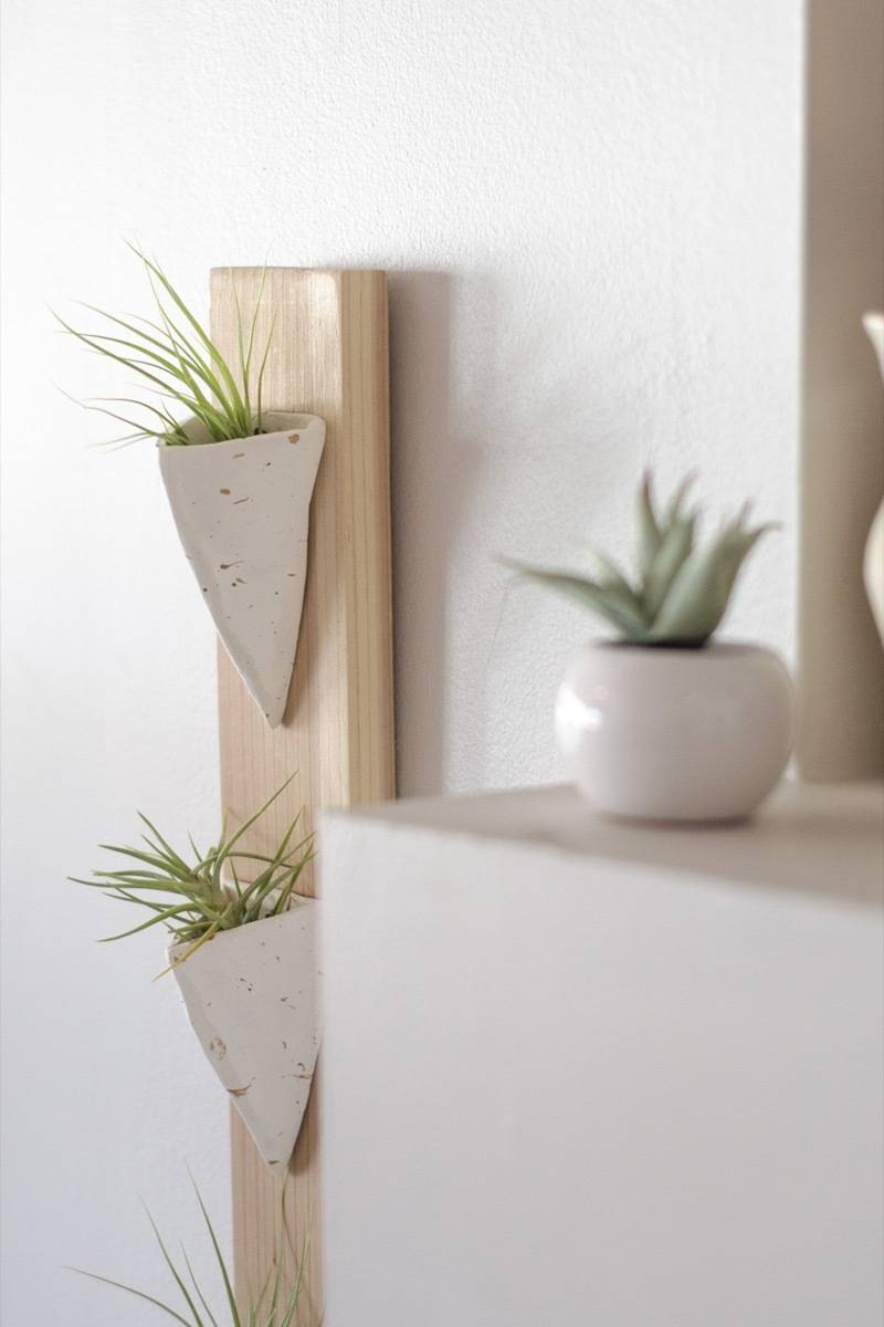 Detail shot of wall-mounted air plant holder