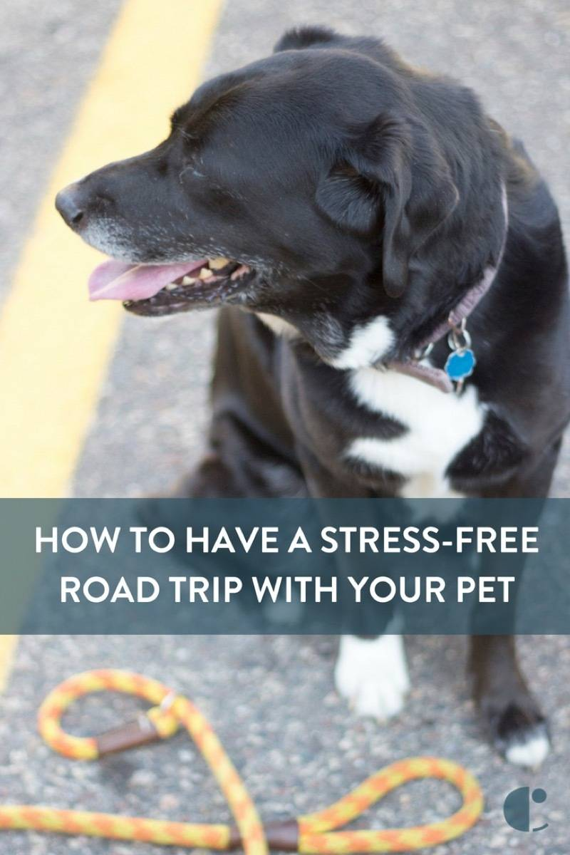 Traveling with dogs and cats - 9 tips