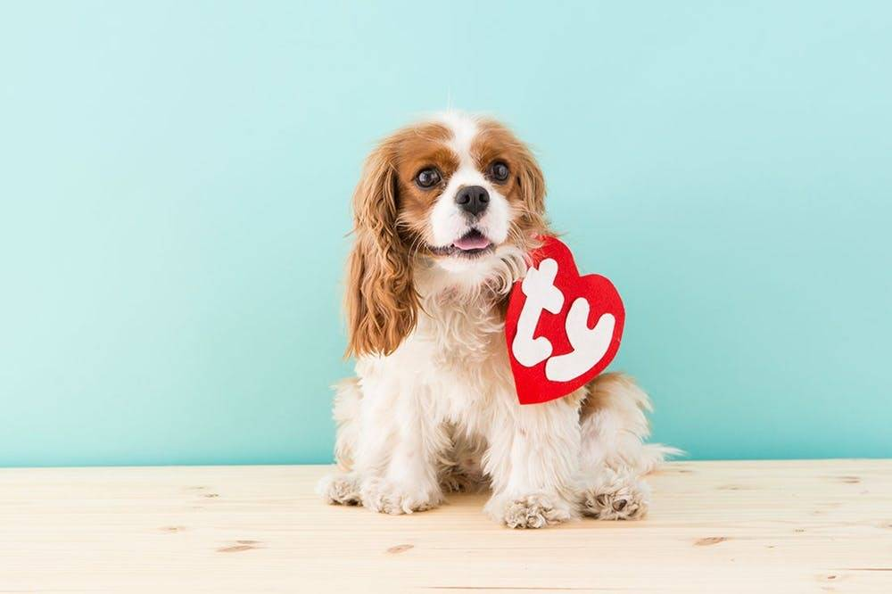 Halloween pet costume idea: dog beanie baby