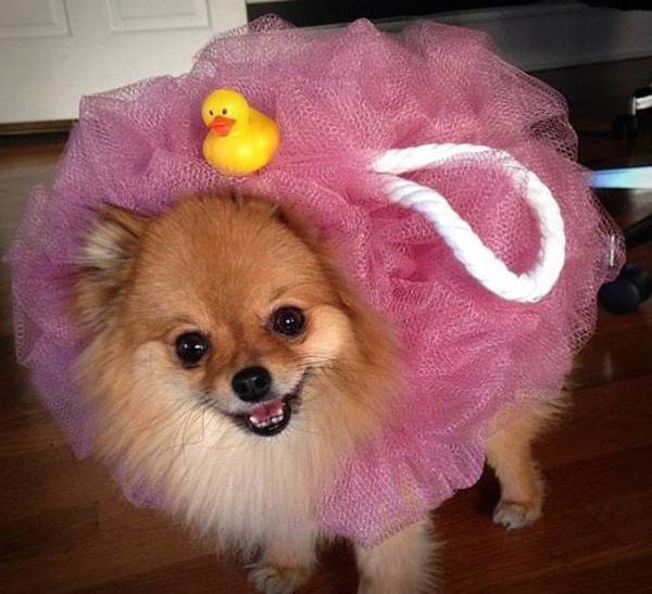 Dog Halloween costume shower pouf