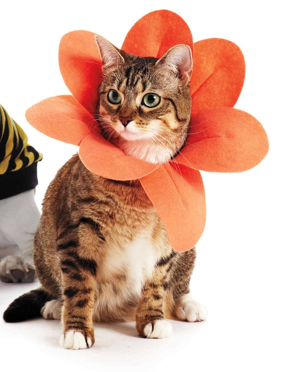Flower cat Halloween costume