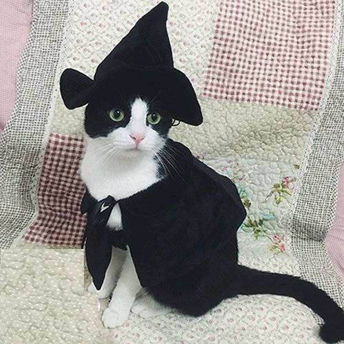 Halloween witch cat costume