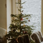 Real Christmas Tree 101 How To Buy A Tree And Keep It Looking Its Best Curbly