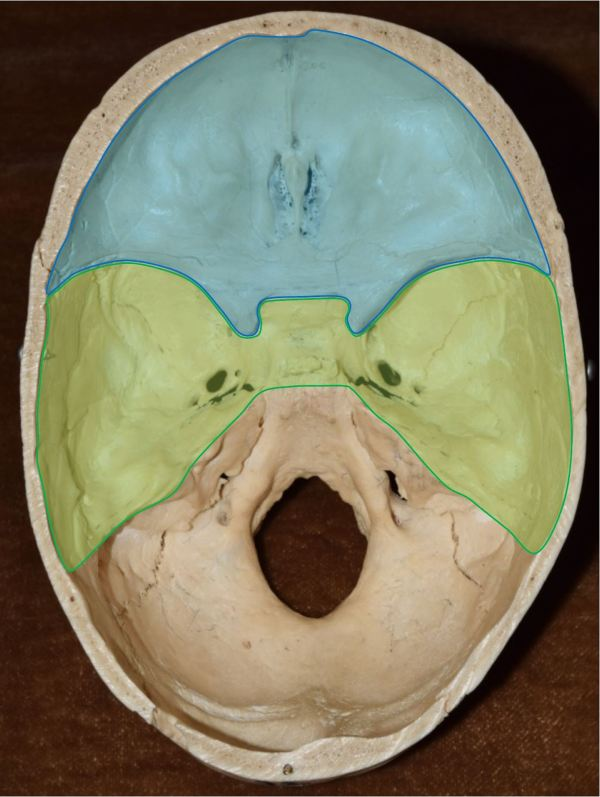 20 Cranial Fossa Nerves Pictures And Ideas On Meta Networks