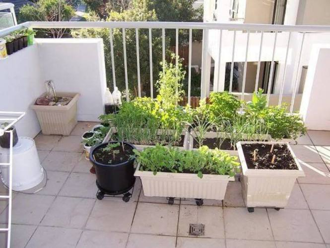 6 Tips To Start Balcony Garden Ideas For Vegetables Design