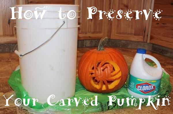IMG 6415 opt copy How to Preserve Your Carved Pumpkin with Household Items!