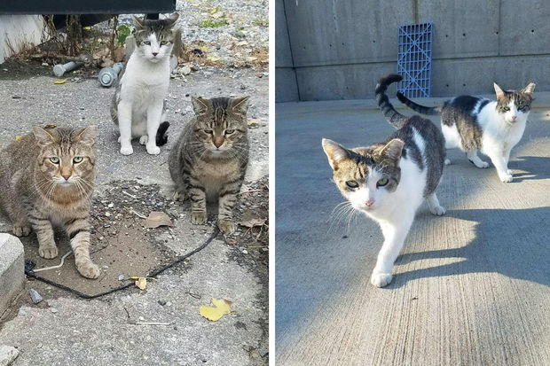 Plan to Keep Coyotes at Bay Is Starving Astoria Cat Colony