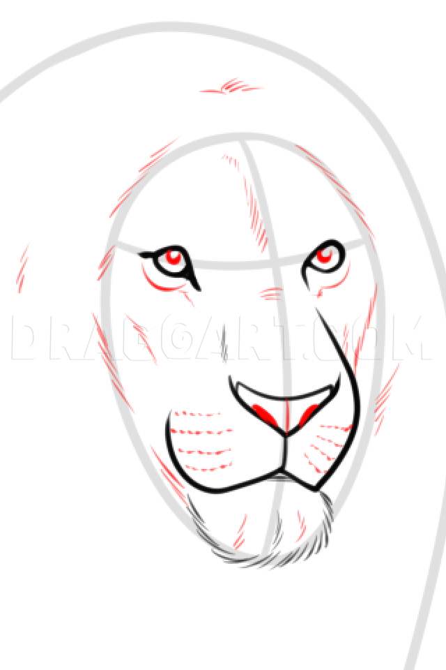 How To Draw A Lioness : lioness, Drawing, Realistic, Lion,, Step,, Guide,, Dragoart.com