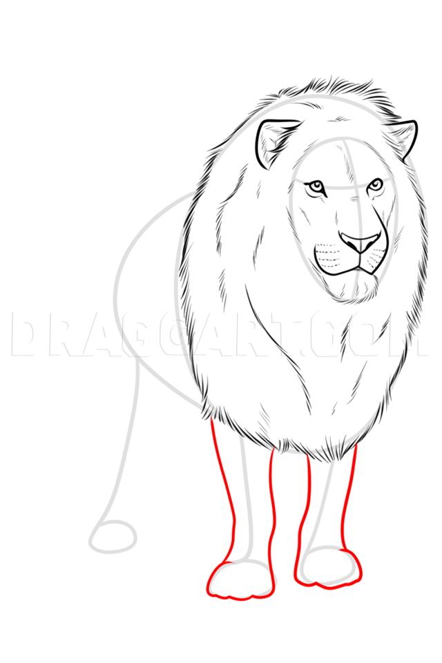 Lion Realistic Drawing : realistic, drawing, Drawing, Realistic, Lion,, Step,, Guide,, Dragoart.com