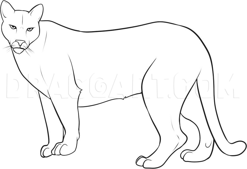 How To Draw A Mountain Lion Step By Step Drawing Guide By Dawn Dragoart Com