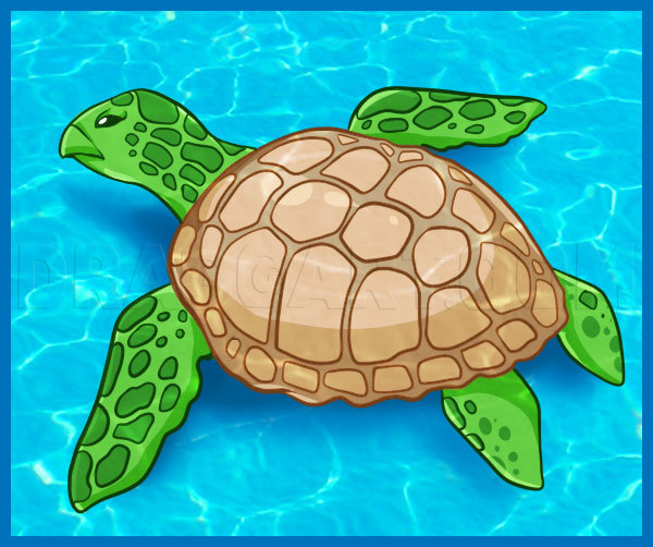 How To Draw A Sea Turtle Step By Step Drawing Guide By Dawn Dragoart Com