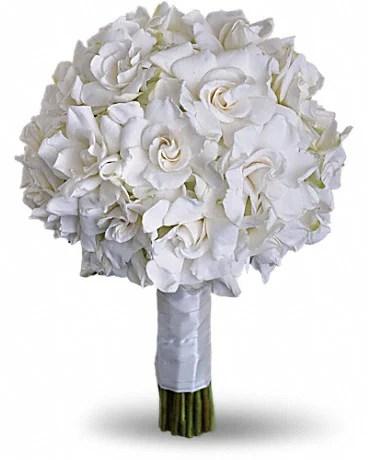 Buy The Best Gardenia & Cape Jasmine Shrubs, Bushes