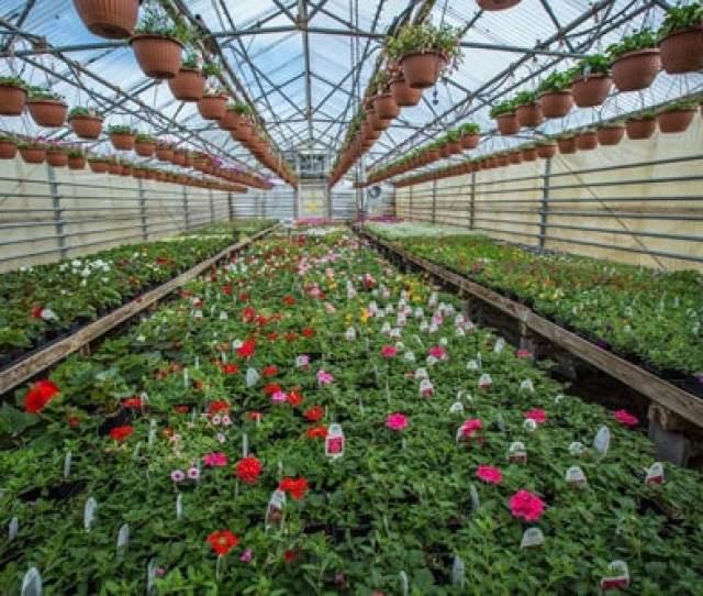 Welcome To Holland Nurseries Garden Centre