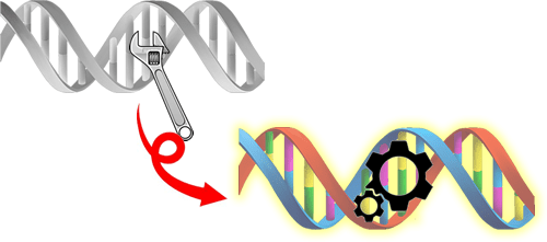 Installing artificial nucleotide bases in DNA