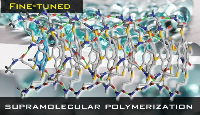 Fine-tuned Supramolecular Polymerization
