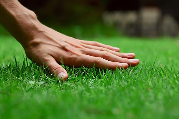 start lawn care landscaping