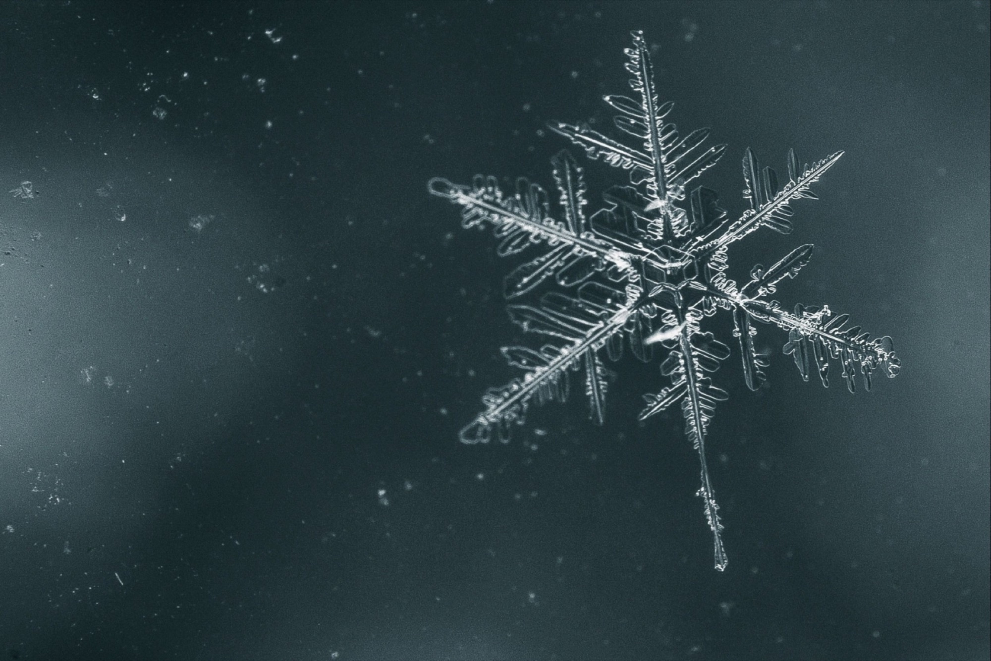 why the snowflake test