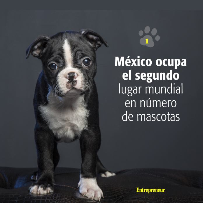 1534529266 Mascotas Instagram2 What You Need To Know To Open An 'Everything For Your Dog' Store