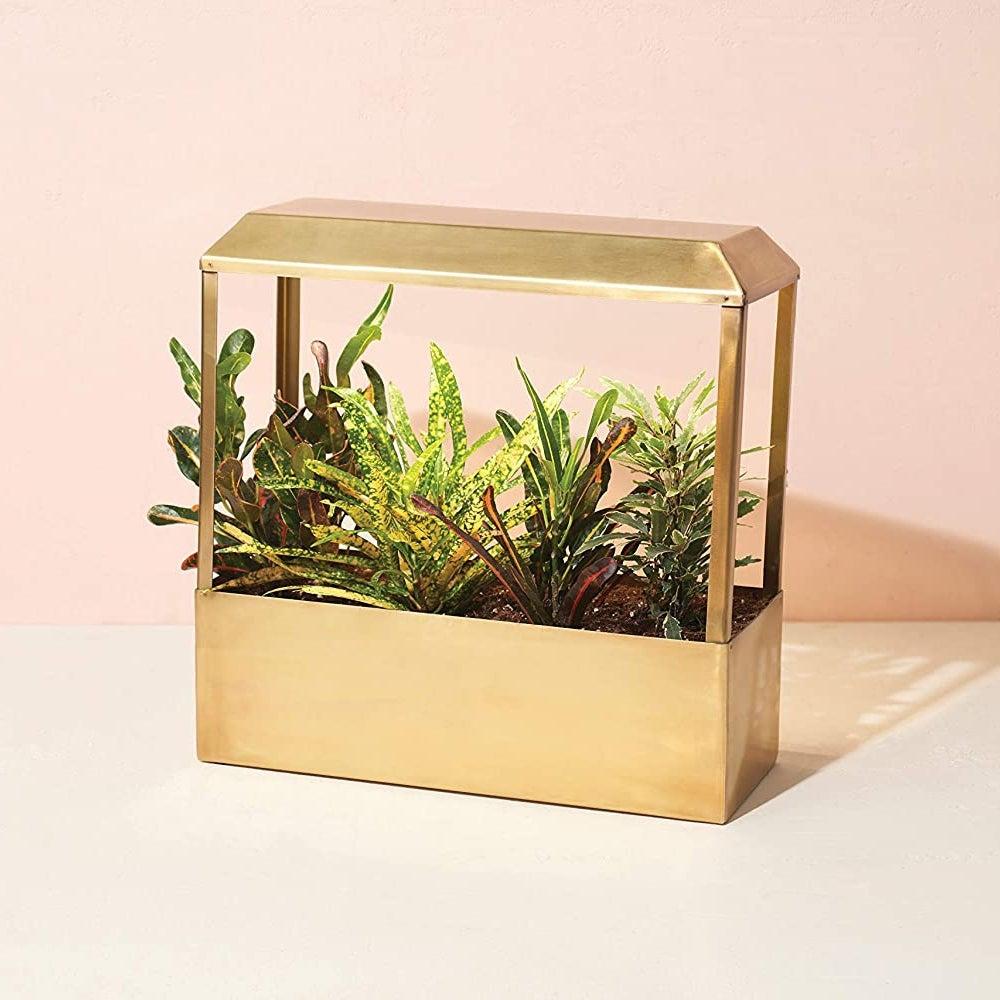 Meilleur ensemble: Modern Sprout Brass Growhouse V2 (199$)