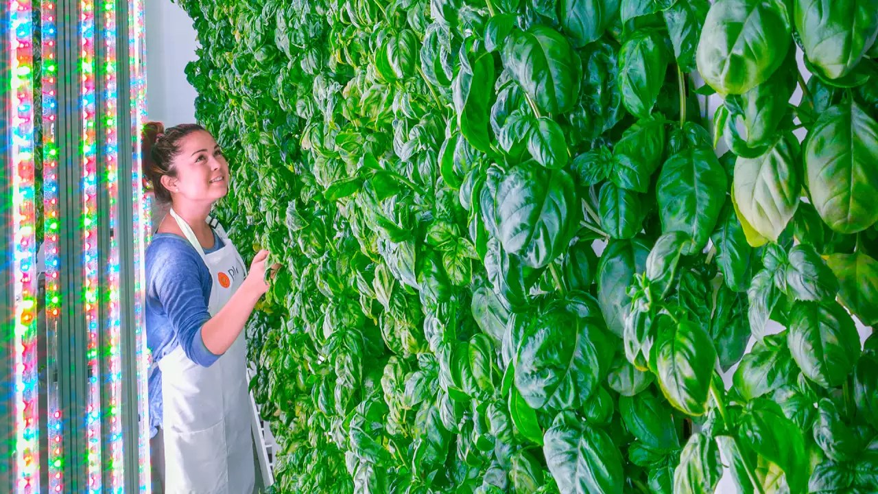 Has This Silicon Valley Startup Finally Nailed The Indoor Farming Model