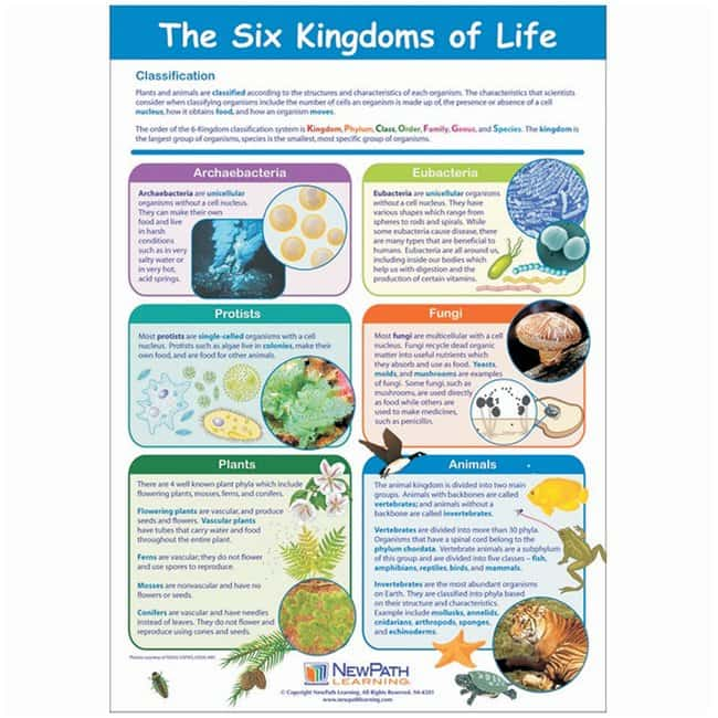 The Six Kingdoms Of Life Poster Eachteaching Supplies