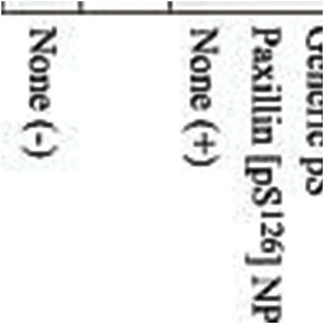 Phospho-Paxillin (Ser126), Polyclonal, Invitrogen™ 10