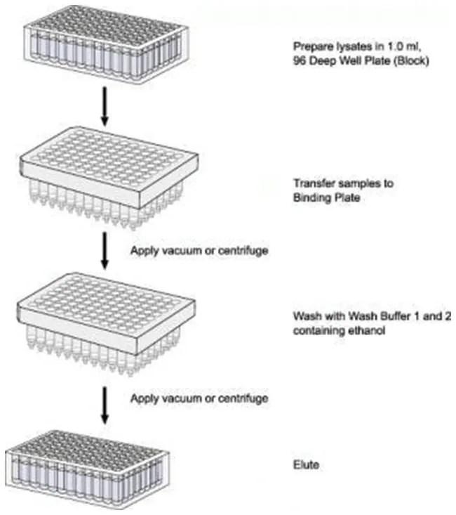 Invitrogen PureLink Pro 96 Viral RNA/DNA Purification Kit