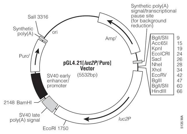 Promega pGL4 Luciferase Reporter Vectors:Life Sciences