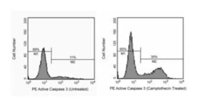 Active Caspase-3 Rabbit, PE, Clone: C92-605, BD:Life
