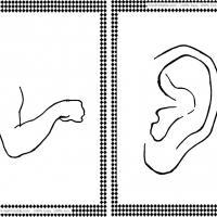 Arm and Ear Flash Cards