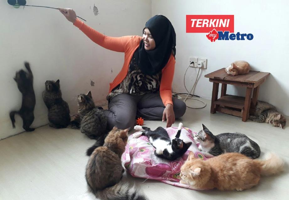 24 kucing pengubat rindu METROTV  Harian Metro