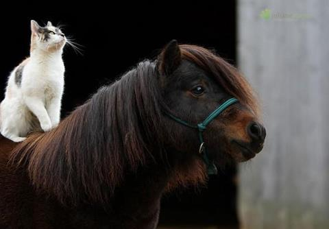 12 Photos of Cats Riding Horses  HORSE NATION