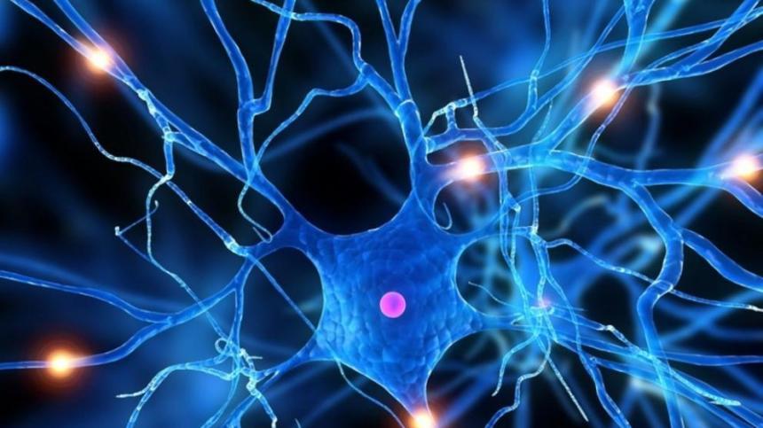 El consumo de mate prevendría la aparición de Parkinson