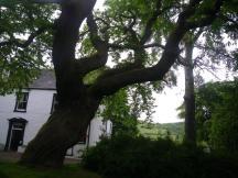 0616 Invermoriston to Drumnadrochit 6 Benleva & hanging tree