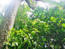 Mossman Gorge spider