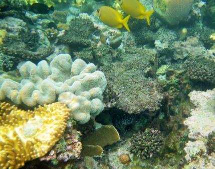 Wavelength 6 yellow fish