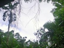Bingil Bay 4 fruit bats