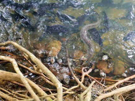 Bingil Bay 6 eel fish & turtles