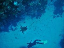 Cairns snorkeling 5 Green turtle & John