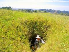 Ruapekapeka bunker 2