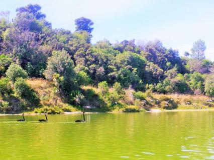 Lake Tutira 1
